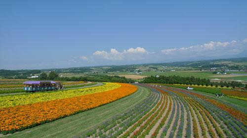 北海道D3-fl花們2.jpg