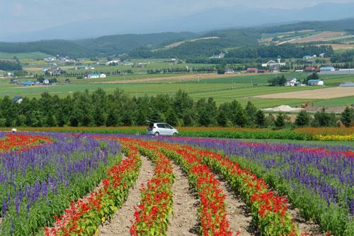 北海道D3-fl花們3.jpg