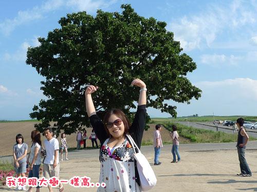 北海道D3-七星之樹1.jpg