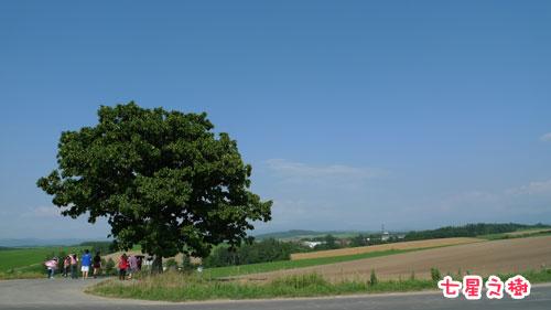 北海道D3-七星之樹.jpg