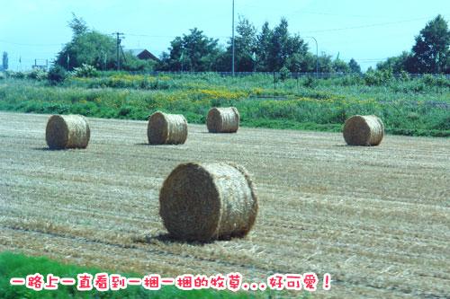 北海道D3-牧草.jpg