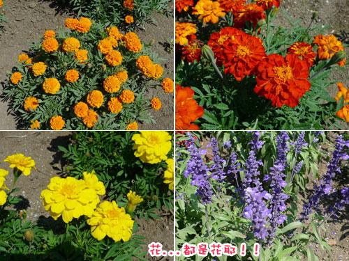 北海道D3-花兒們.jpg