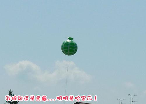 北海道D3-烏龜.jpg