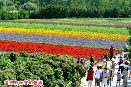 北海道D3-富田農場.jpg