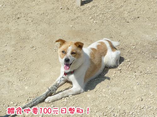 北海道D3-餵食狗.jpg