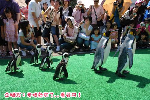 北海道D4-企鵝2.jpg