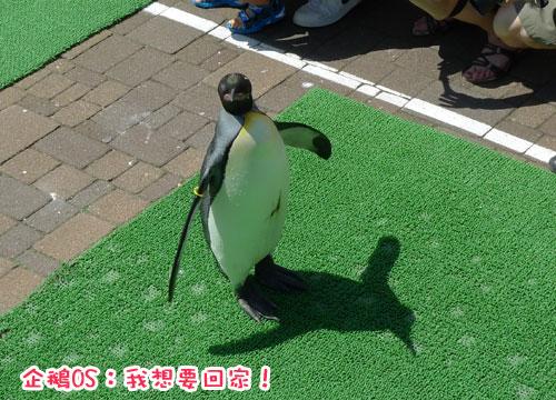 北海道D4-企鵝3.jpg