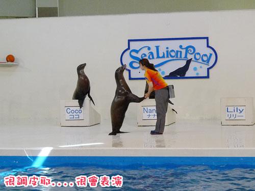北海道D4-海獅2.jpg