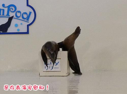 北海道D4-海獅3.jpg