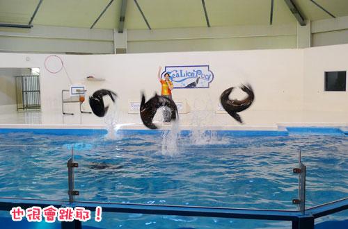 北海道D4-海獅4.jpg