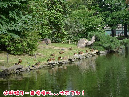 北海道D5-就道廳5.jpg