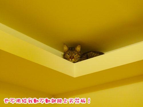 貴妃3歲---天花板.jpg