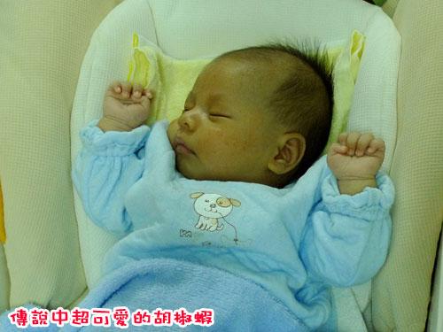 胡椒蝦---睡昏昏.jpg