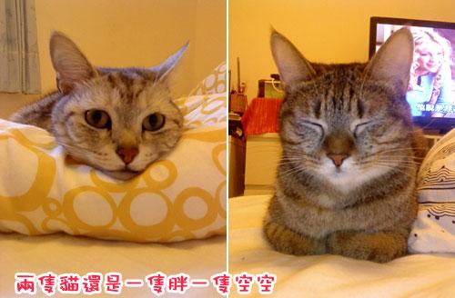 土城一周年---兩隻貓.jpg