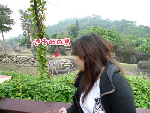 跨年-動物園.jpg