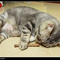 nEO_IMG_P1080372.jpg