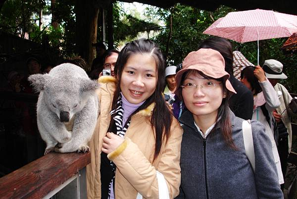 940625-1雪梨動物園與無尾熊的合照.JPG