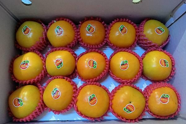 1061101-1黃金甜柿.JPG