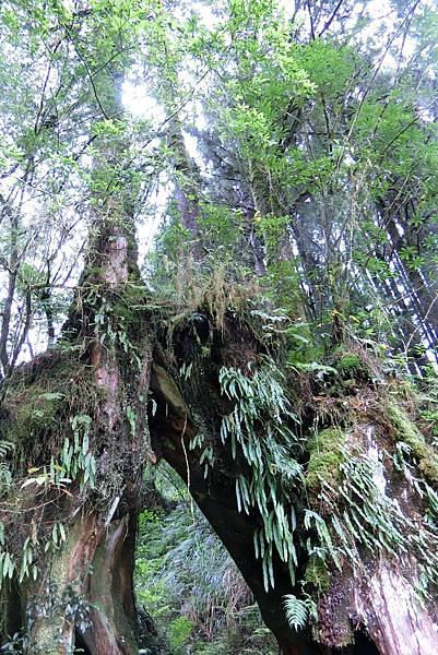 1070916-26阿里山國家森林遊樂區.JPG