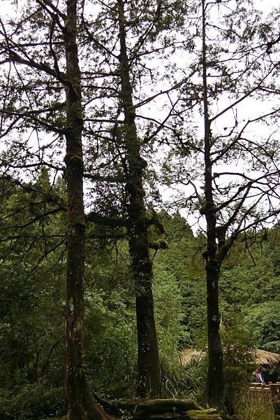 1070916-31阿里山國家森林遊樂區.JPG