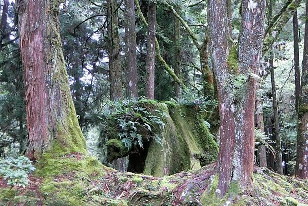 1070916-33阿里山國家森林遊樂區.JPG