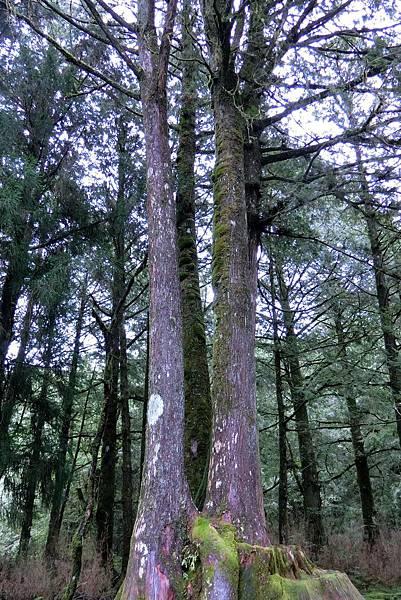 1070916-32阿里山國家森林遊樂區.JPG