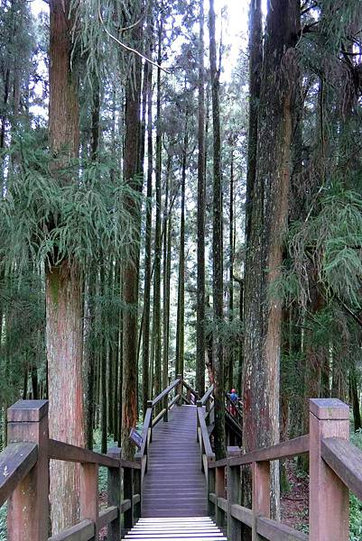1070916-38阿里山國家森林遊樂區.JPG