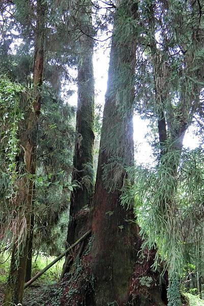 1070916-39阿里山國家森林遊樂區.JPG