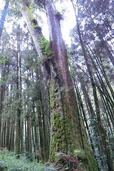 1070916-45阿里山國家森林遊樂區23.JPG