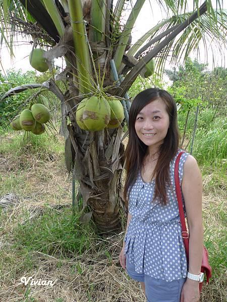 台南縣 採水果 201506