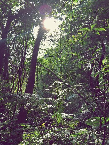 大板根森林