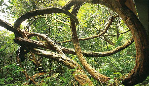 大板根官網http://www.dabangan.com.tw/forest/index3.php