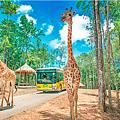Safari Phu Quoc 官方提供