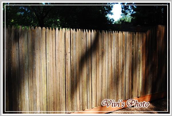 Old Fence(Online).jpg
