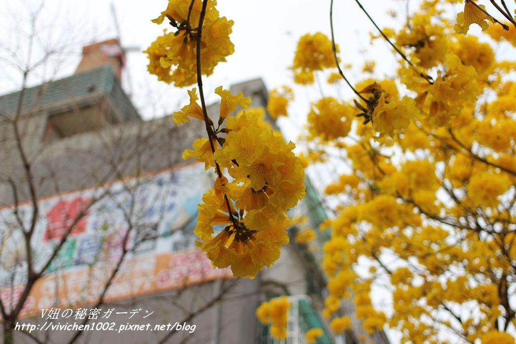 IMG_6879_副本.jpg
