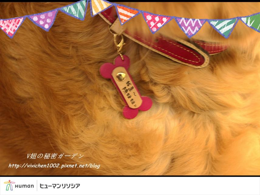 照片 2.JPG
