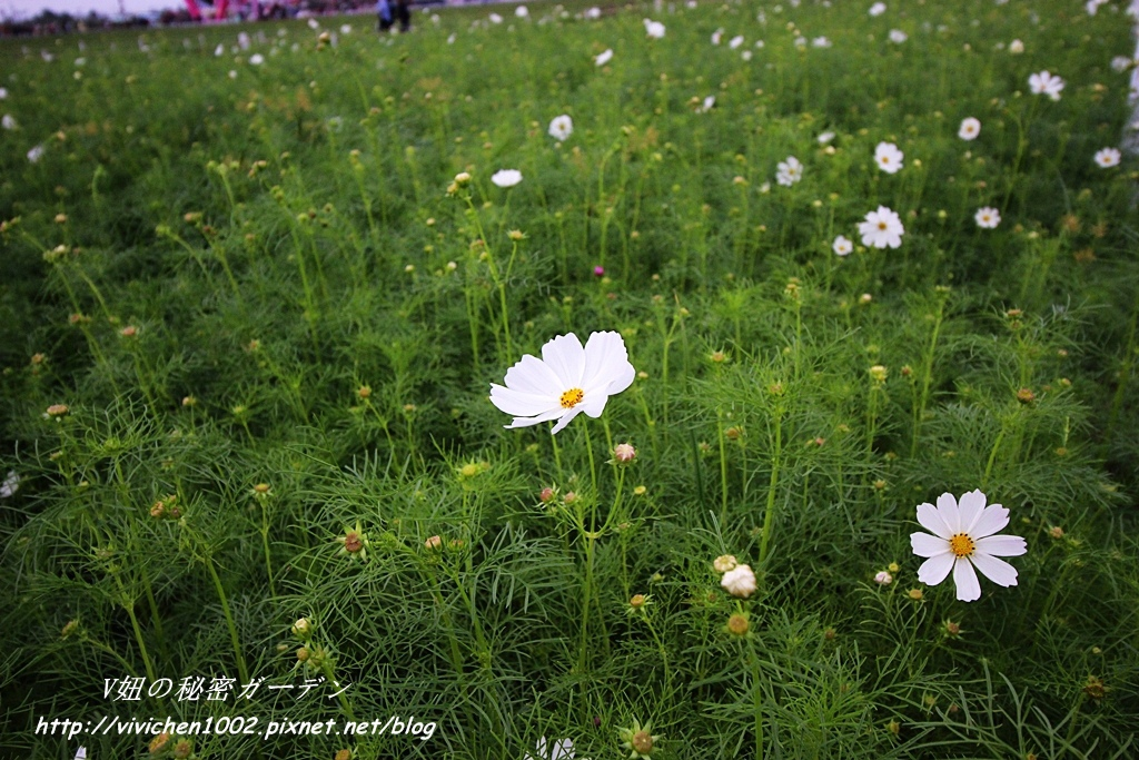 IMG_1501_副本.jpg