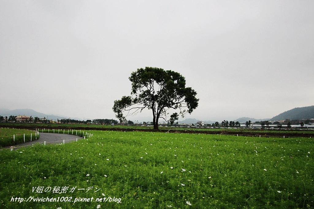 IMG_1511_副本.jpg