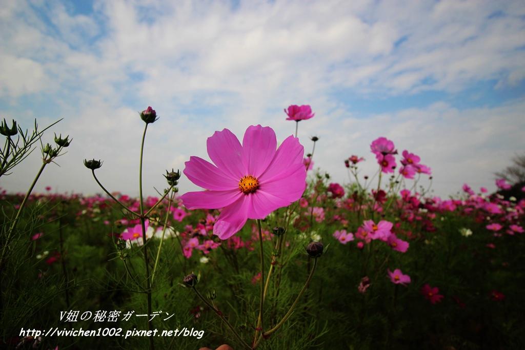 IMG_3469_副本.jpg