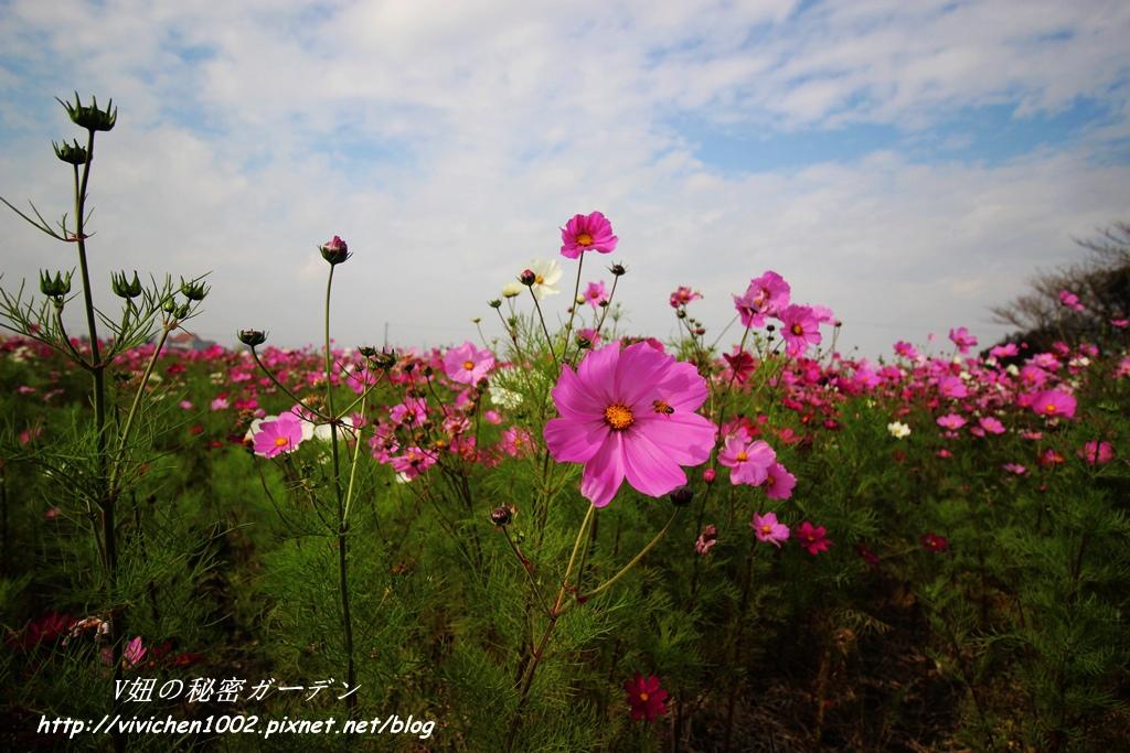 IMG_3468_副本.jpg