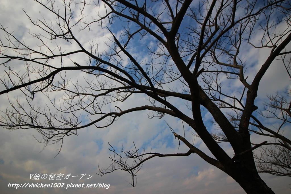 IMG_3484_副本.jpg