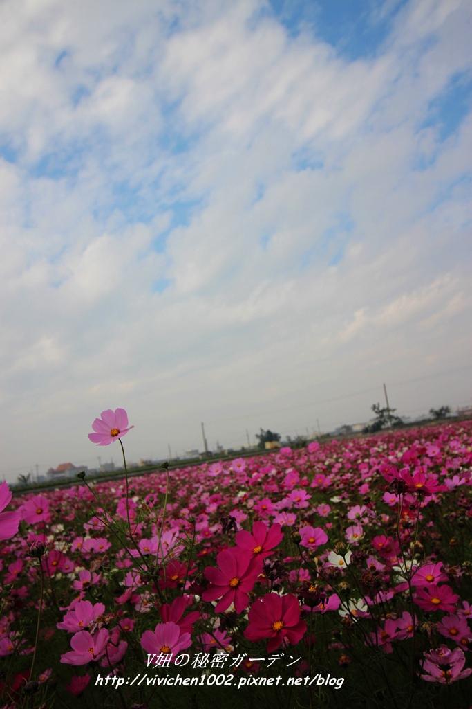 IMG_3487_副本.jpg
