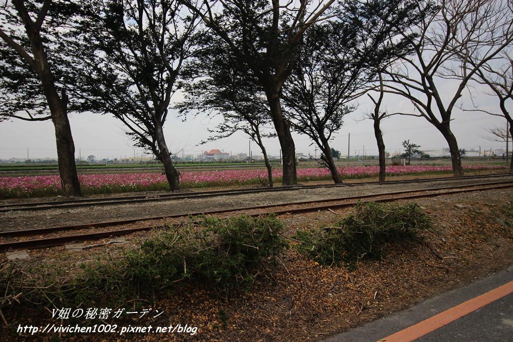 IMG_3495_副本.jpg