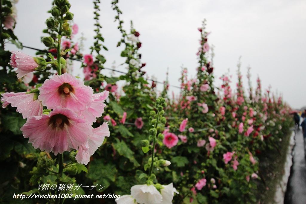 IMG_3903_副本.jpg