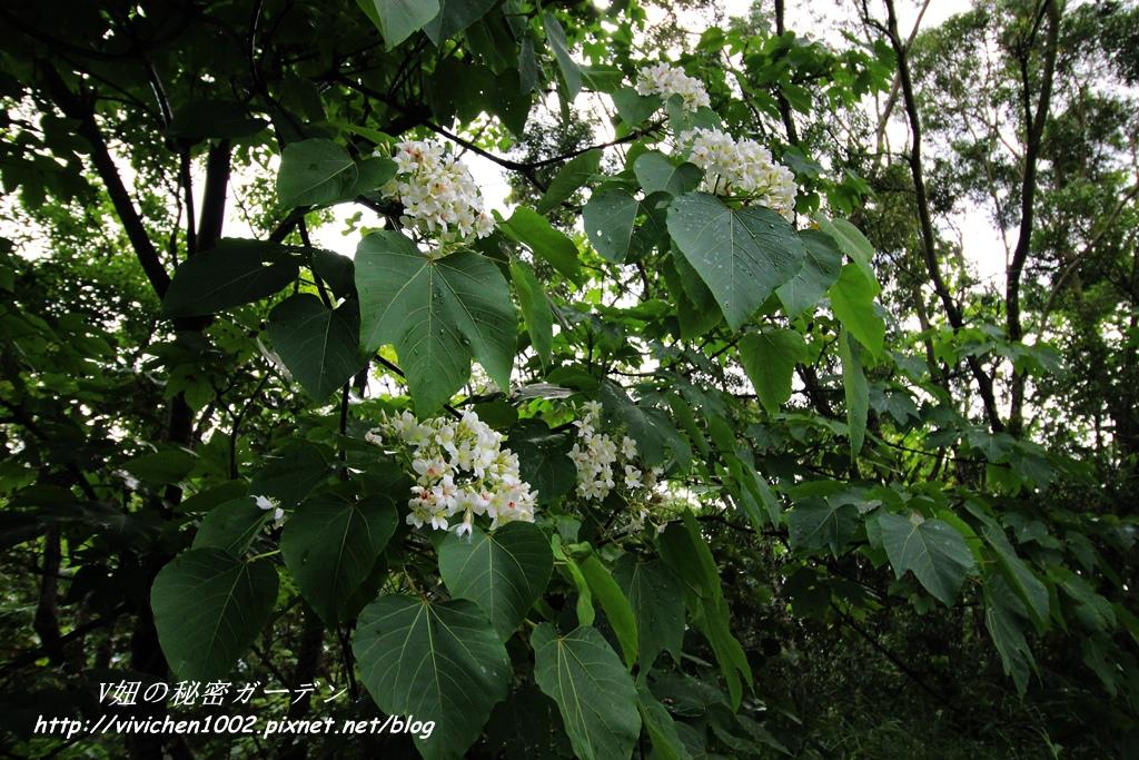 IMG_4038_副本.jpg