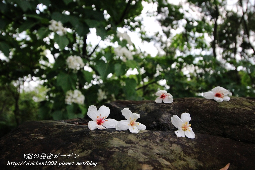 IMG_4043_副本.jpg
