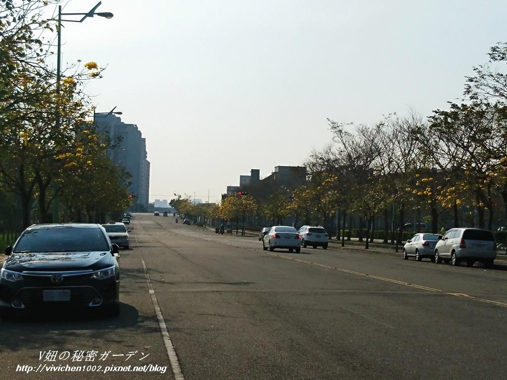 DSC_1384_副本.jpg