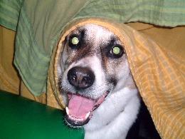2003-5-13印度狗.jpg