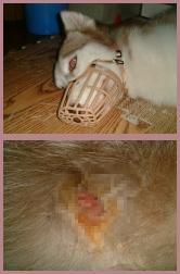 2003-7-13突發嚴重過敏皮膚炎.jpg
