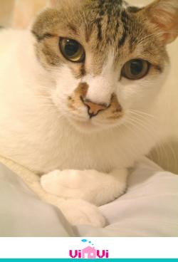 2004-12-23神貓咪咪將.jpg